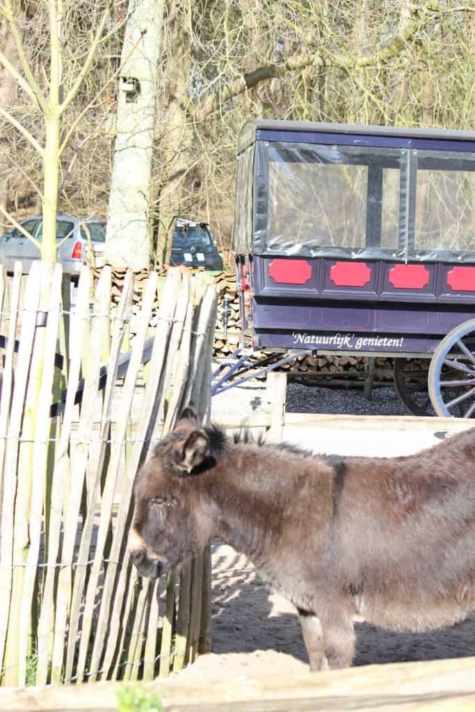 Gasterij Kruisberg ezel tram