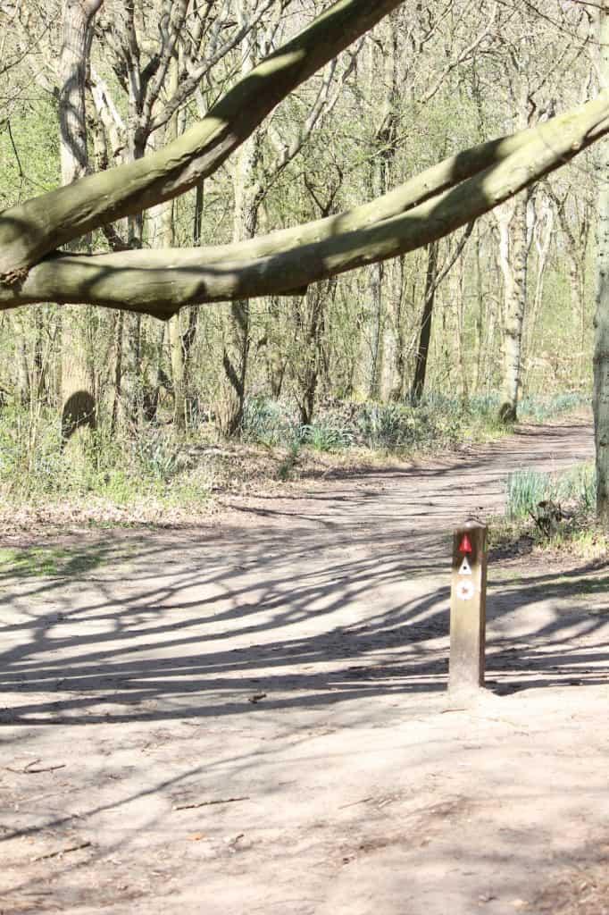 Noordholland Duinreservaat overhangende boom