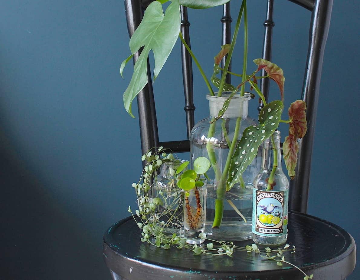 Stekken, zo verzamel je de leukste planten!