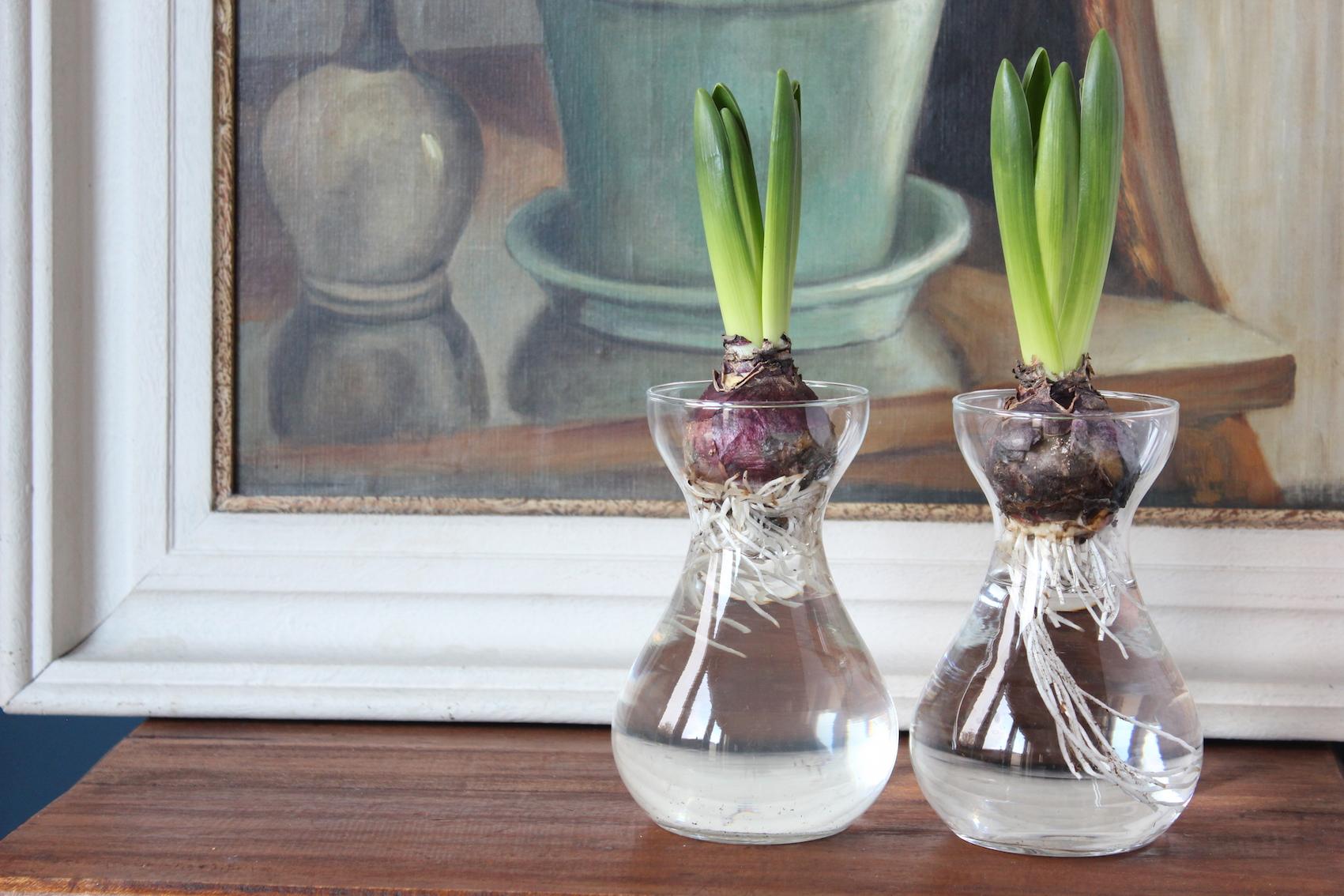 Hyacinten in bollenvaasjes? | ENJOY! The Good Life
