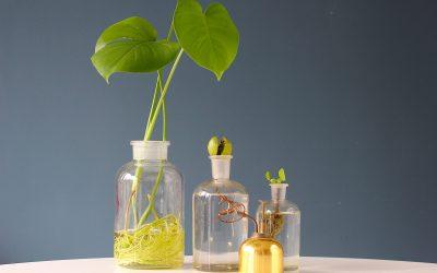 Hydroponie: Je planten op water houden!