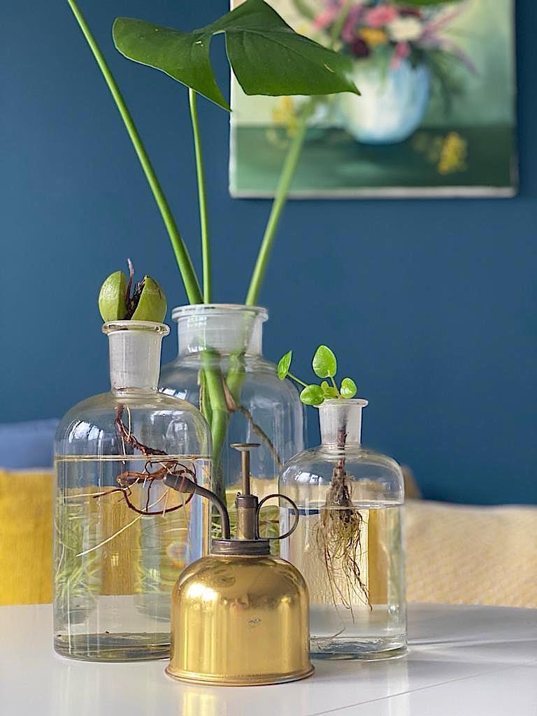 Hydroponie: Je planten op water houden!   ENJOY! The Good Life