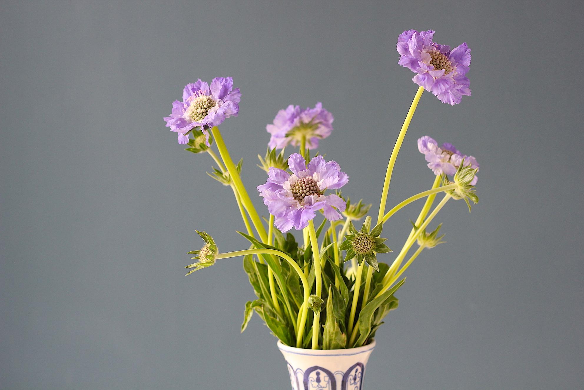Duifkruid, mooi als tuinplant of als snijbloem | ENJOY! The Good Life